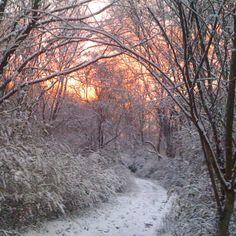 winter wonder land 2010