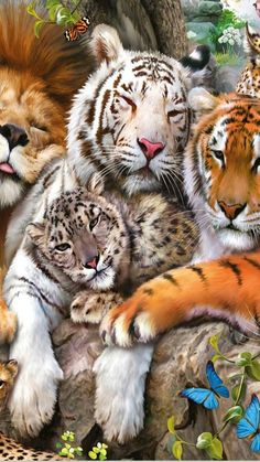 Pin by Julie Wertz on All Cats Rare Animals, Jungle Animals, Animals And Pets, Funny Animals, Tiger Pictures, Cute Animal Pictures, Beautiful Cats, Animals Beautiful, Big Cats Art