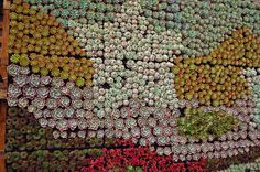 Succulent Vertical Gardens that Robin Stockwell masterfully creates.
