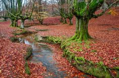 Hayedo de Otzarreta (Parque Natural de Gorbeia), Vizcaya