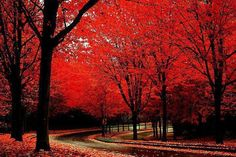 Road in Red forrest