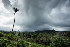 Ambon - Landscape - Typical sight of Ambon Island, Agriculture, Forest and palms.