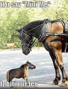 extremely cute horse pics - Google Search