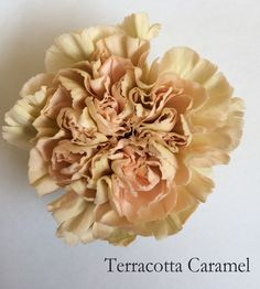 Terracotta Caramel, part of the Antique Collection available from Florabundance Wholesale.
