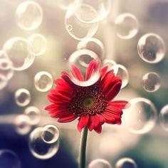 Bộ ảnh vũ điệu loài hoa tuyệt đẹp dành cho người yêu thiên nhiên - Ảnh 9.