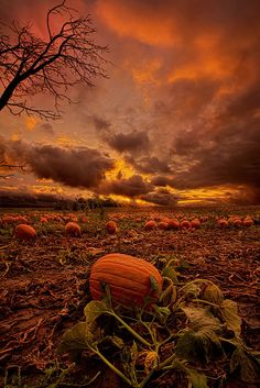 Waiting for the Great Pumpkin by Phil Koch