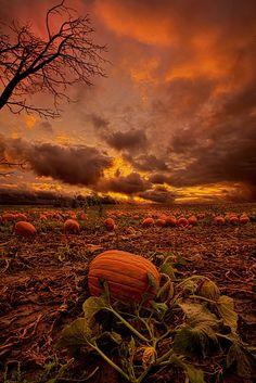 Autumn scenery - Waiting For The Great Pumpkin Art Print Foto Gif, Pumpkin Art, Pumpkin Field, Pumpkin Plants, Pumpkin Canvas, Large Pumpkin, Spiced Pumpkin, Spooky Pumpkin, Pumpkin Spice