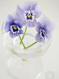 reminds me of the little flowers I used to pick for my mom...weeds no doubt :)