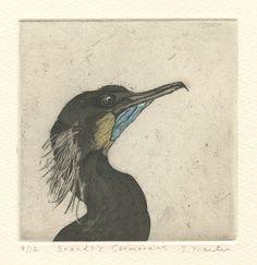 Brandt's Cormorant, original etching of Pacific coast sea bird