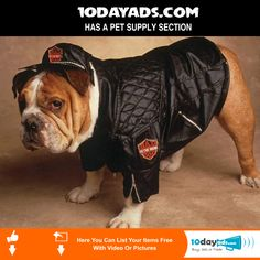 0dayads.com Has a Pet Supply Section. #OnlineClassifieds #LocalClassifieds #PostFreeAds #FreeClassifiedssites #freeads #freevideoads