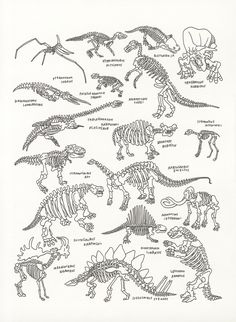 Dinosaurs at The American Museum of Natural History by Jason Polan