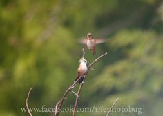 the hummingbirds have returned...San Juan Island, WA