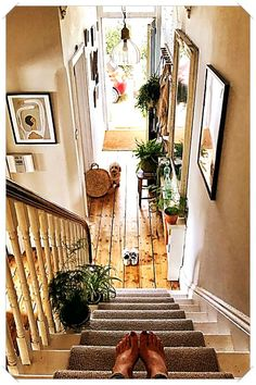 Rob has called a halt to the garden plants indoors thing I've had going on - having to peel a snail off the mirror in the hallway (from the… Home idea. Stairs, Decor, Warm Home Decor, House Design, Bright Hallway, Victorian Hallway, Hallway Designs, Home Decor, House Interior