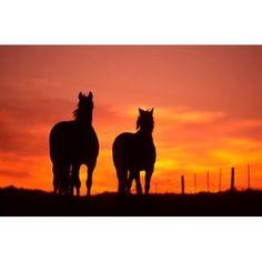 Horses at Sunset near Ranfurly Maniototo Central Otago Canvas Art - David Wall DanitaDelimont x Sunset Painting Easy, Watercolor Sunset, Watercolor Ideas, Horse Canvas Painting, Canvas Art, Horse Paintings, Canvas Ideas, Canvas Paintings, Silhouette Painting