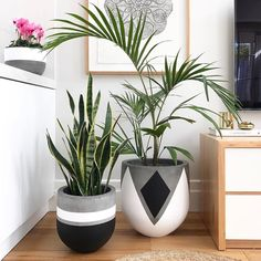 Plant Stand ideas to Fill Your Living Room With Greenery You Will Love It . Plant Stand id Painted Plant Pots, Painted Flower Pots, Concrete Crafts, Concrete Planters, Decoration Plante, House Plants Decor, Deco Floral, Diy Décoration, Potted Plants