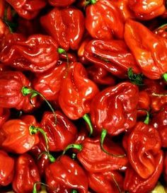 """Jamaican Hot Red Scotch Bonnet Pepper- 4 Plants by Hirts: Pepper Plants. $7.99. Very, Very Hot!. This is a """"Pre-Order"""". Shipping begins on March 1st! Disregard the initial shipping email if purchased before your shipping date. A tracking number will migrate to your account when the plants actually ship.. Ripens green to red. Good to eat fresh, pickle, or use as a garnish. Compact plant bears abundance of peppers. HOT PEPPERS: When Wilbur Scoville first devised a means to test the..."""
