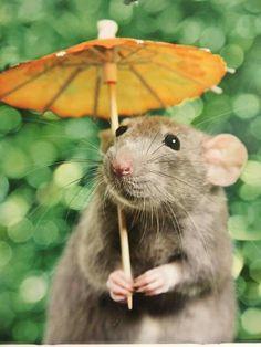 Rat has a nice parasol