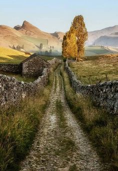 "landscape-lunacy:""Yorkshire Dales, England - by Lars Van De Goor"" South Yorkshire, Yorkshire England, Yorkshire Dales, Cornwall England, England And Scotland, England Uk, Oxford England, London England, Places To Travel"