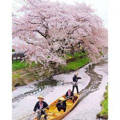 【anime_fact_videos_japan】さんのInstagramをピンしています。 《#cherryblossoms#sakura#sakuraharuno#japan#japanese#Bento#sushi#curry#japansake#beautiful#scenery#travel#vacation#kirei#japanfood#japanesekimono#anime#fashion#family#inspiringquotes#instagram#lifestyle#otaku##kindness#shigatsuwakiminouso#koenokatachi#kiminonawa》