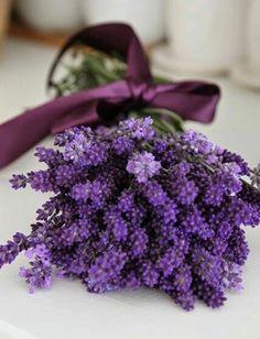 《 a lavendar scented life 》