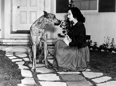 Hedy Lamarr and a great dane.