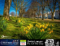 Sauntered through Cambridge Park on my way to Les Cotils. Reminded me of Bournville from my childhood. #LoveGuernsey  http://chrisgeorgephotography.dphoto.com/#/album/cbc2cr/photo/22271859  Picture Ref: 22_03_14 — at St. Peter Port, Guernsey.