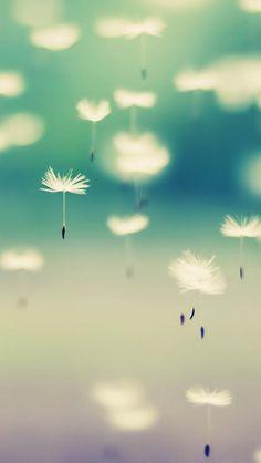Dandelions In The Air iPhone 5/5C/5S Wallpaper
