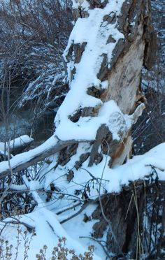 A STUDY IN ICE. CAN YOU SEE A HORSE IN THE TREE AND SNOW?- PHOTO BY ROBIN WILLIAMS