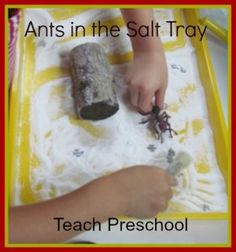 Ants in the salt tray plus more. Read Hey, Little Ant