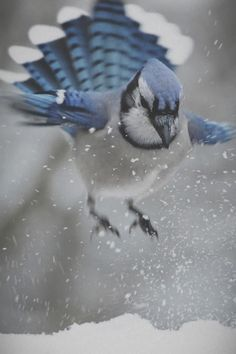 "Blue Jay to Air Traffic Control:  ""I'm trying to land on the snowy runway. Am I cleared for landing?"""