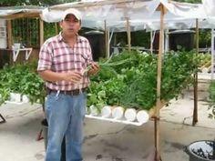 Explicación de sistema hidropónico 100% guatemalteco desarrollado para seguridad alimentaria en las comunidades rurales de nuestro país, no necesita energía ...