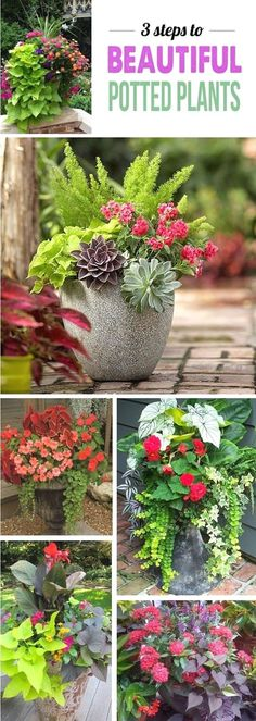 Secret to Gorgeous Plant Pots (The Forever Home Project Great tips for making stunning potted plant arrangements - can't wait to add some color to my deck!Great tips for making stunning potted plant arrangements - can't wait to add some color to my deck! Outdoor Plants, Outdoor Gardens, Porch Plants, Potted Plants For Patio, Deck Plants Ideas, Potted Flowers For Shade, Plants In Pots, Outdoor Spaces, Courtyard Gardens