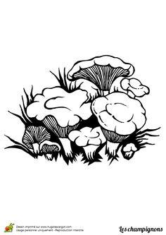 Coloriage / dessin champignon girolle