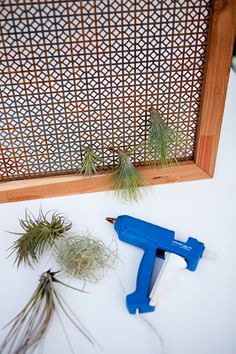 Make your own indoor air plant wall for the winter (u can use hot glue on them) Orchid Plants, Air Plants, Indoor Plants, Succulents Garden, Garden Plants, Terrarium Containers, Terrariums, Air Plant Display, Winter Plants