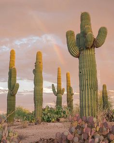 Your place to buy and sell all things handmade Desert Dream, Desert Life, Photo Wall Collage, Picture Wall, Desert Aesthetic, Cactus Photography, Cactus Art, Cactus Cactus, Desert Cactus