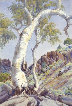 Albert Namatjira Ghost Gum, MacDonnell Ranges, Central Australia (c. watercolour over pencil × cm (image) × cm (sheet) Indigenous Australian Art, Indigenous Art, Australian Artists, Aboriginal Artwork, Aboriginal Artists, Aboriginal Education, Indigenous Education, Aboriginal People, Landscape Art