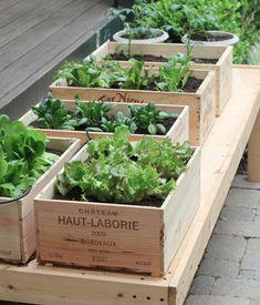 grøntsager i vinkasser #urtehave i kasser
