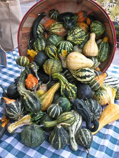 A bounty of gourds at Broad Ripple Farmers Market!