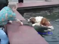People rescuing dogs