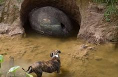 A passer-by found a meter-long shell on a riverbank in Argentina that may be from a glyptodont, an enormous ancestor of today's armadillo.