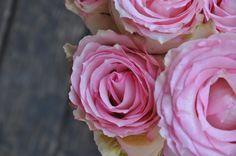 Beautiful pink roses I got