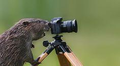 animais que querem ser fotografos (17)