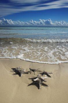 Tangalooma Starfish