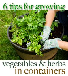 6 Tips for Growing Vegetables and Herbs in Containers by Amanda Formaro for FamilyCorner.com Magazine