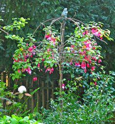 Fuchsia on umbrella trellis