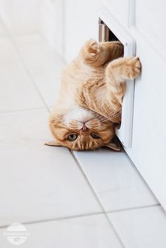 Silly crazy cats, taking a break, the doors, kitten, silly cats, funny cats, baby animals, kitti, ginger cats