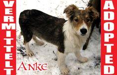 Vor wenigen Minuten hat ANKE ein neues Zuhause in Deutschland gefunden. DANKE, Ihr Lieben und alles Gute, kleine Prinzessin!