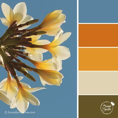 Tropical Sky colour palette by Brand Smoothie