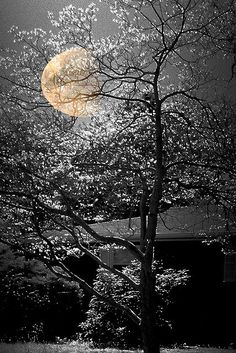 The Big moon in Winter * by Nellie Vin on Flickr