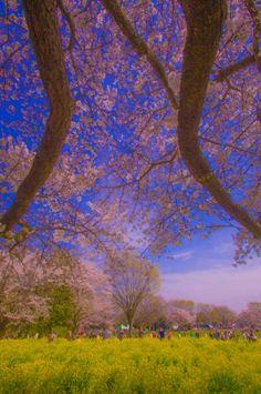 Showa Memorial Park in Tokyo, Japan